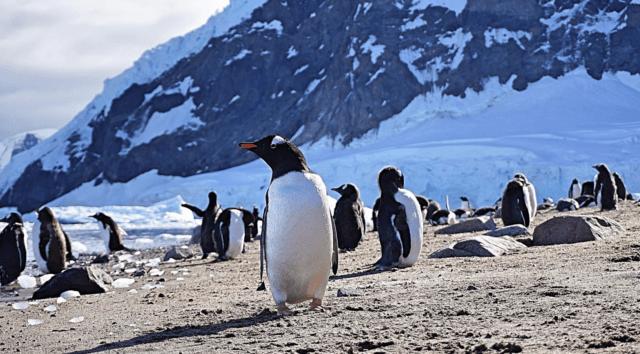 4 Adventures in Antartica