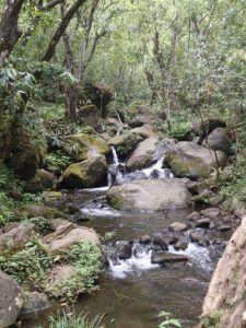 Kalalau_Trail_Stream_for_Water