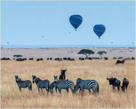 Where to Go for a Luxury Safari Getaway