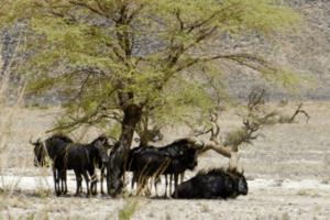 Etosha_National_Park_South_Africa