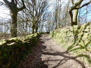 Typical_trail_Camino_de_santiago