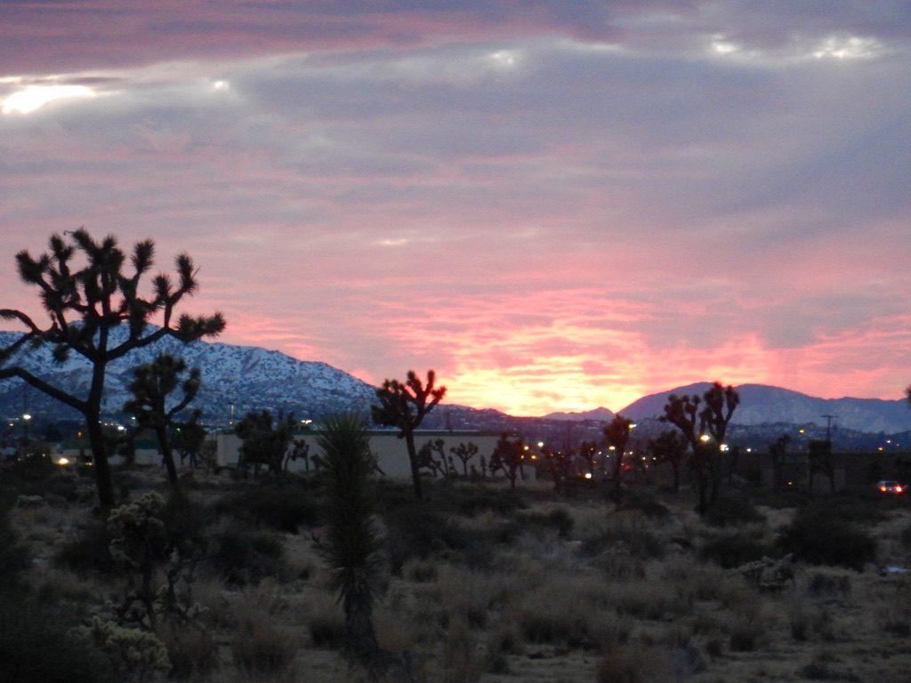 Sunset_Joshua_Tree_California_by_Heidi_Siefkas